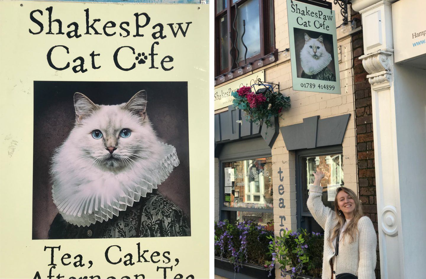 Shakespaw Cat Cafe Stratford Upon Avon