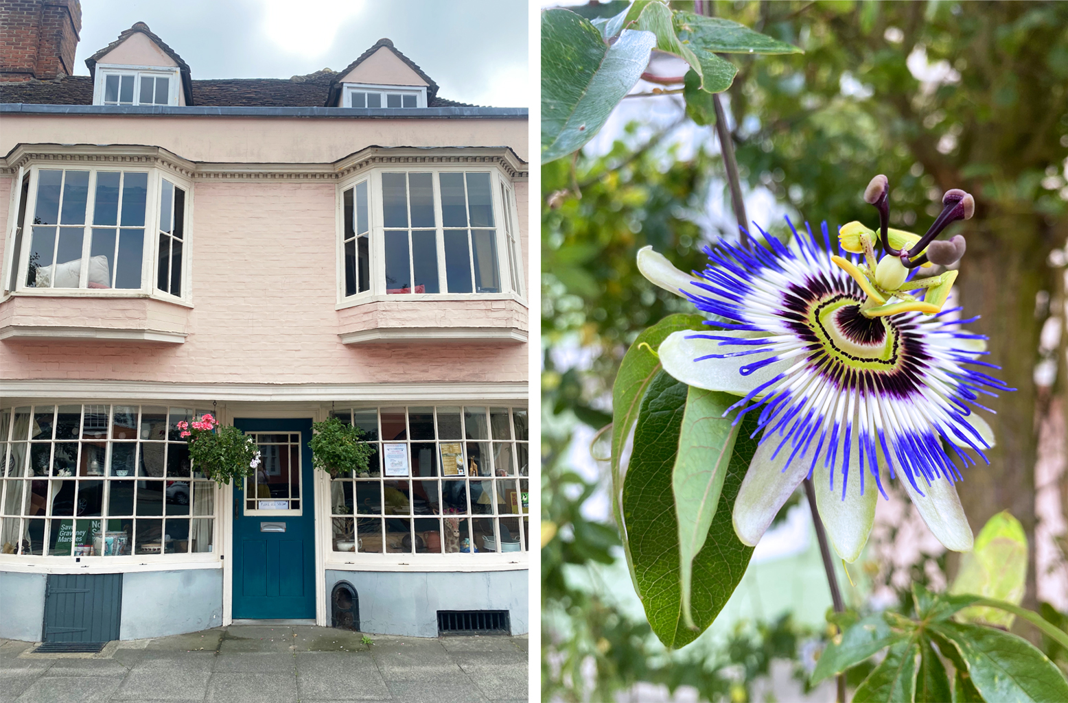 Faversham Houses and Flower